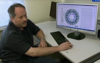 Расшифрован геном пшеницы